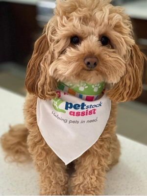 top online pet supplies stores